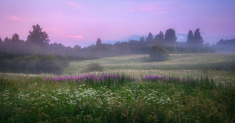 утро, рассвет, туман, поле, россия, разнотравье, иван-чай, сидозеро Волшебство рассветаphoto preview