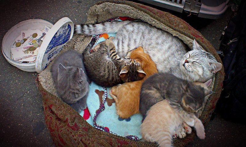 котята, кот Пять комочков счастьяphoto preview