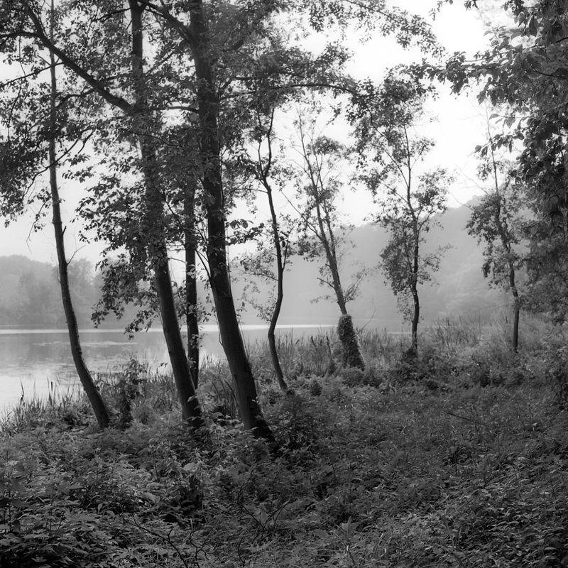 лес., река., утро. \