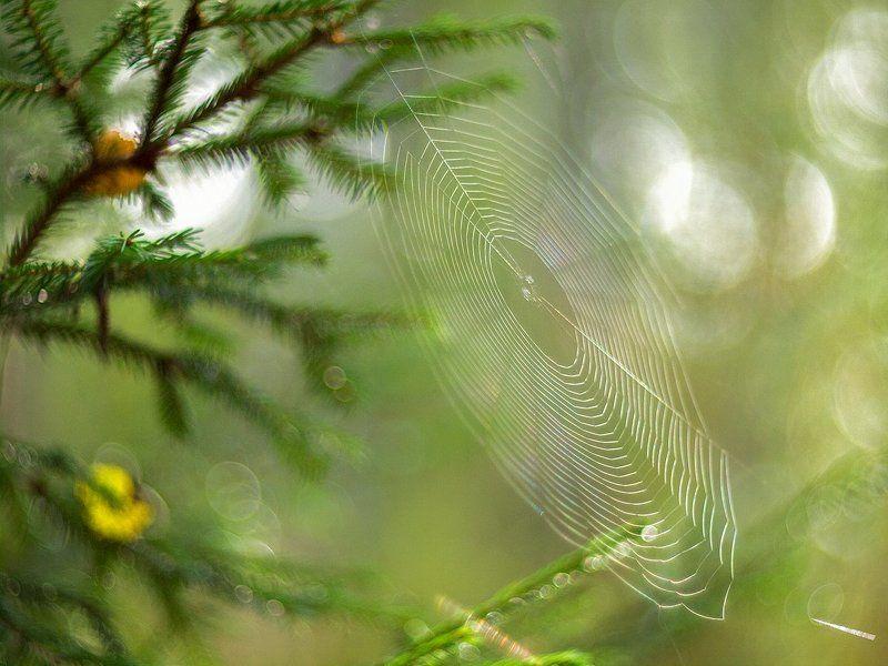 Мелодия утреннего лесаphoto preview