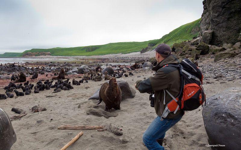 Морские млекопитающие, Северный морской котик Стоять! Аусвайс, блин!photo preview
