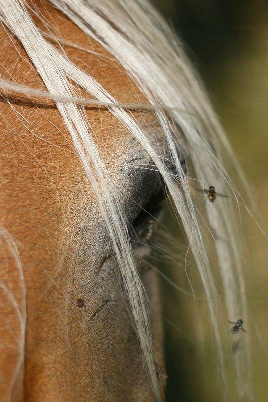 конь - мой другphoto preview