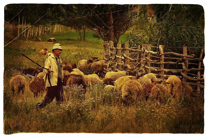 Овчарня.photo preview
