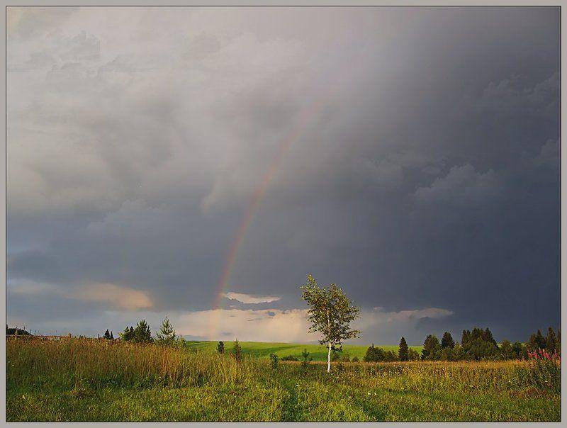 лето,гроза,небо,пейзаж,тучи Пейзаж с березой после грозыphoto preview