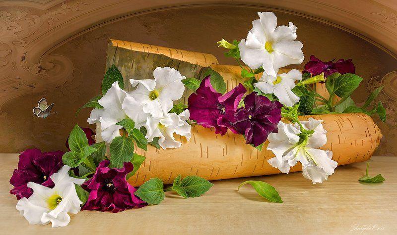 Береста, Петуния, Цветы С берестой и цветамиphoto preview