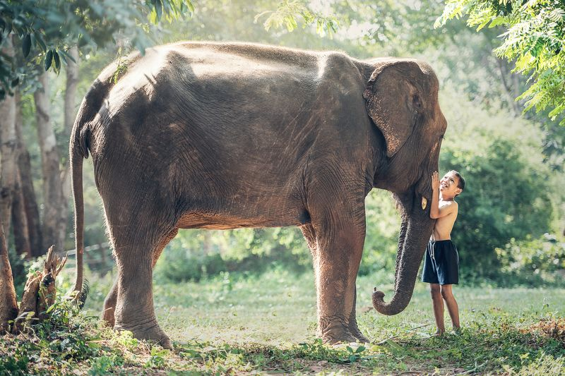 africa, animal, asian, attachment, ayutthaya, beast, big, black, boy, bright, cambodia, canny, child, clasp, close, conservation, drag, elephant, endangered, friend, friendship, heavy, herbivore, hug, huge, innocent, intelligent, jungle, laos, large, life Friendship between children with elephantphoto preview