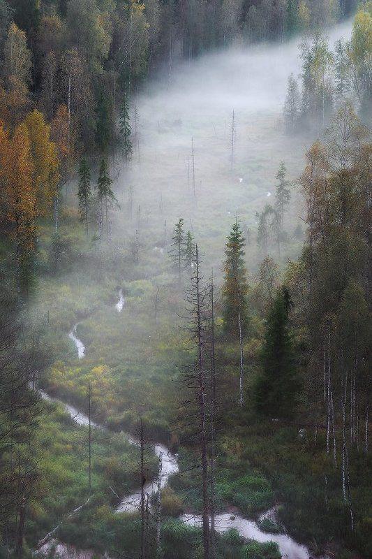 ленинградская область, туман,осень Дыхание осениphoto preview