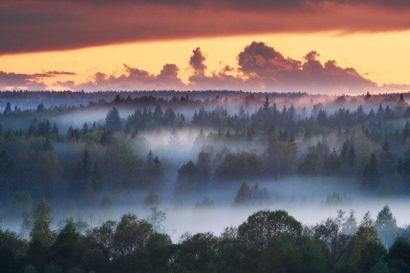 Ленинградская область, Осень, Туман Вечер в лесахphoto preview