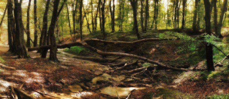 В лесу-3photo preview