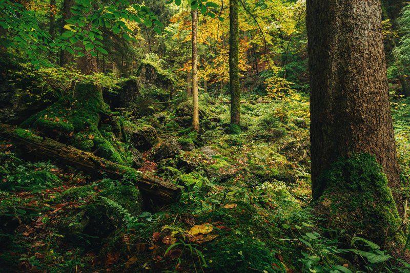 Альпы, Горы, Лес, Осень Альпийский лес дышит осеньюphoto preview