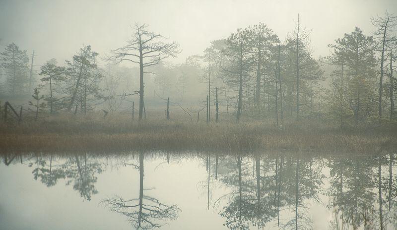...утро туманноеphoto preview