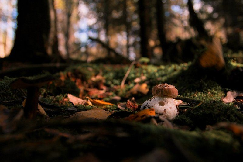 макро, осень В сентябреphoto preview