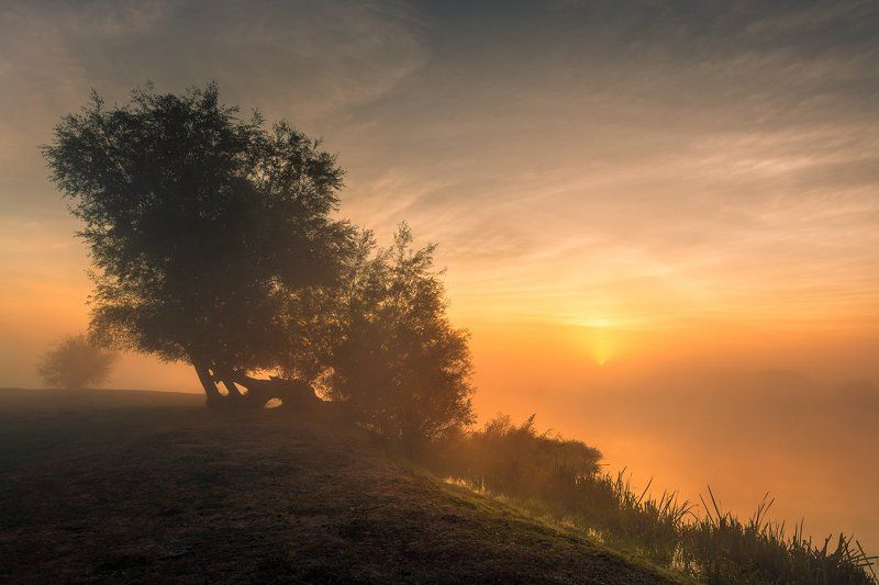 Dawn, Morning, Nature, River, Soothing, Sunrise, Tree *photo preview