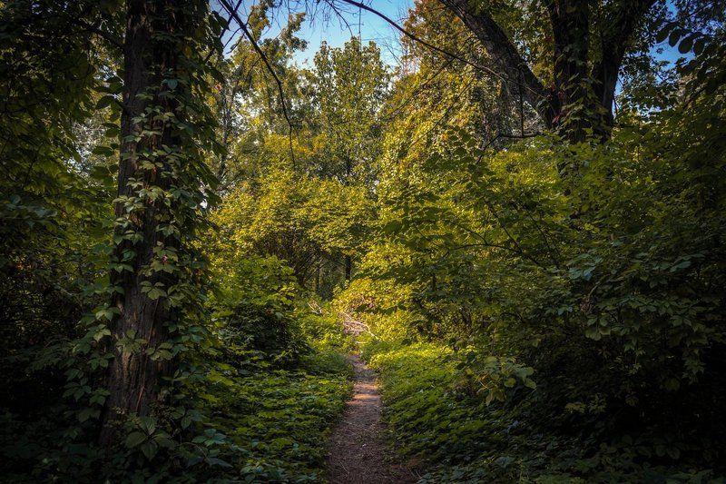 Казахстан, Алматы, ботанический, сад, тропинка Ботанический садphoto preview