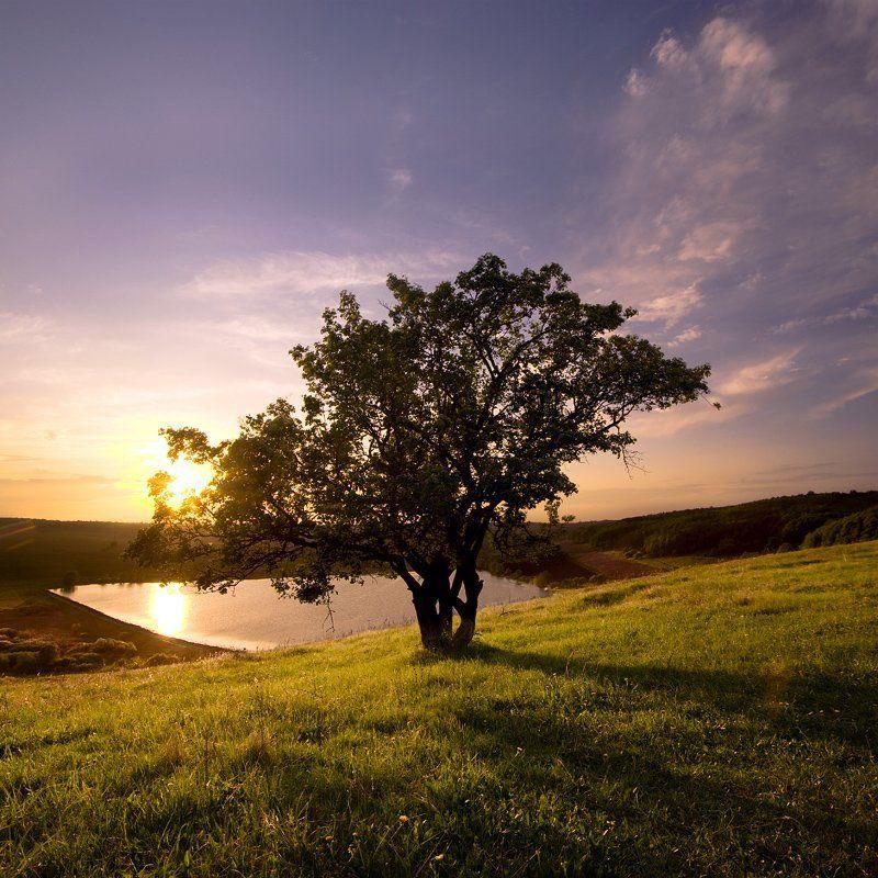 Дерево.photo preview