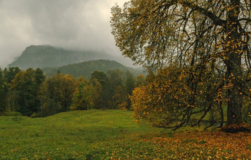 Горы, Дождь, Лес, Осень Осенний марафонphoto preview