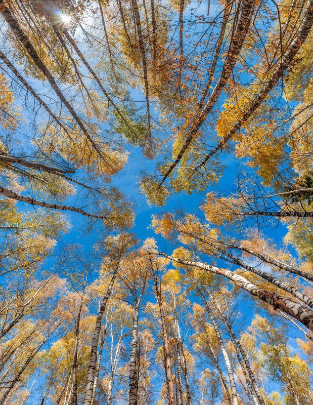 Полет в осеньphoto preview