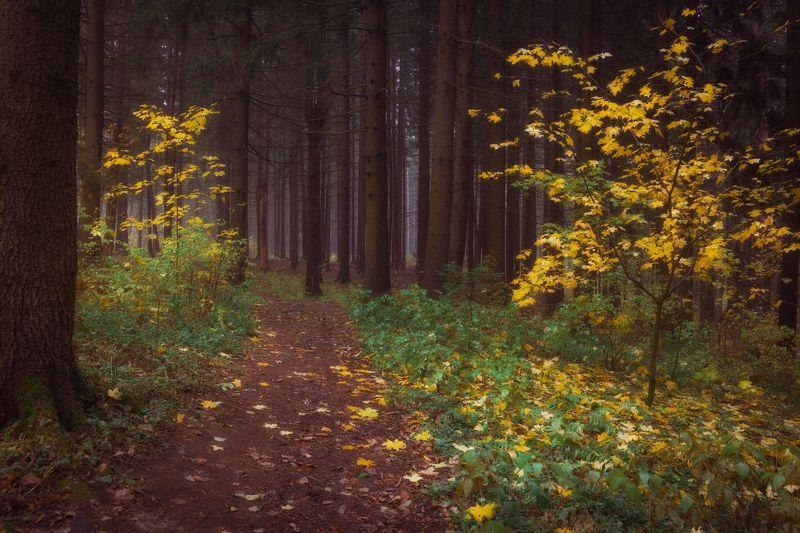 Пора осени пришла и в лес нас позвалаphoto preview