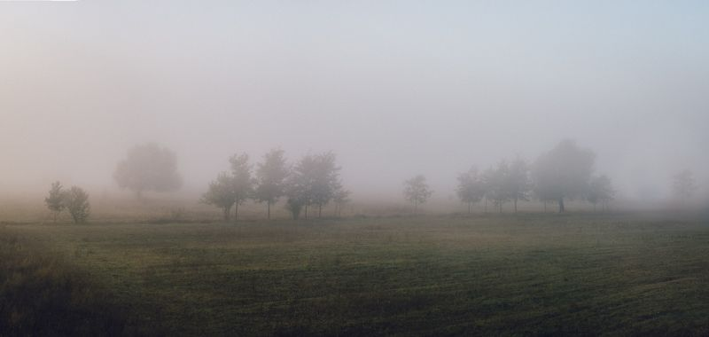 FOG in MORNINGphoto preview