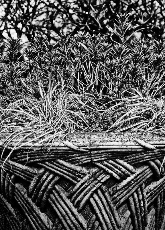 Растительный орнаментphoto preview