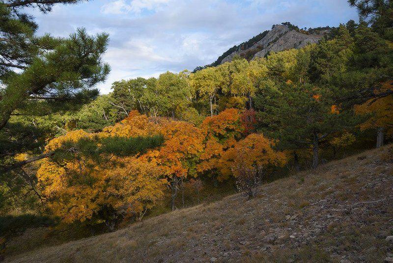 Октябрь в родных горах. photo preview