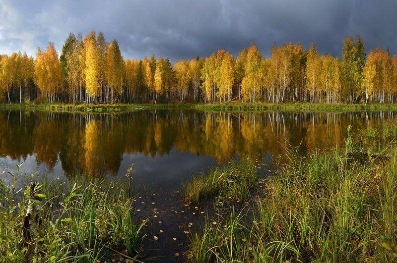 золотая осень, октябрь, солнечный свет, берёзы, непогода, небо, тучи, осень, озеро, отражение, трава, пейзаж, природа Перед дождёмphoto preview