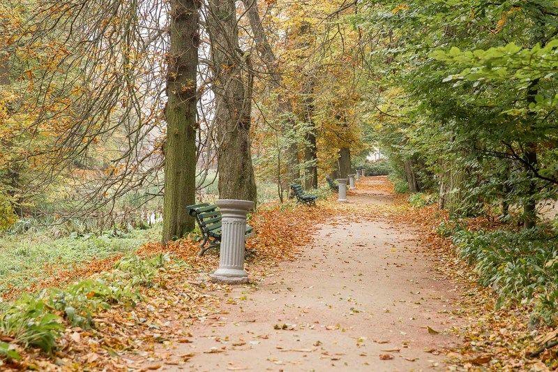 осень, парк, Умань, Софиевка, листья, скамейка, аллея Осень в паркеphoto preview