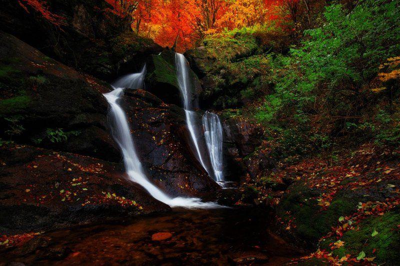 Цветовете на Стара планинаphoto preview