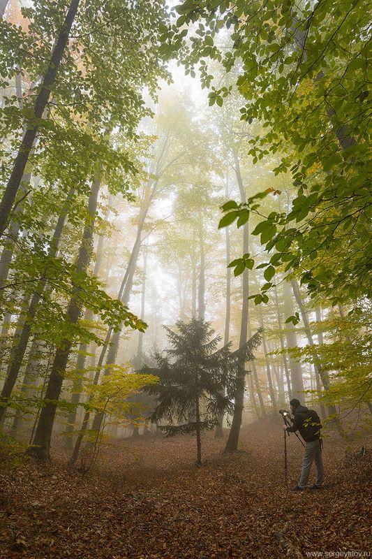 крым, ялта, осень, лес, туман, дерево, листья, фотограф крым, фотограф ялта, пейзажи крыма, осень в крыму Осень в Крымуphoto preview