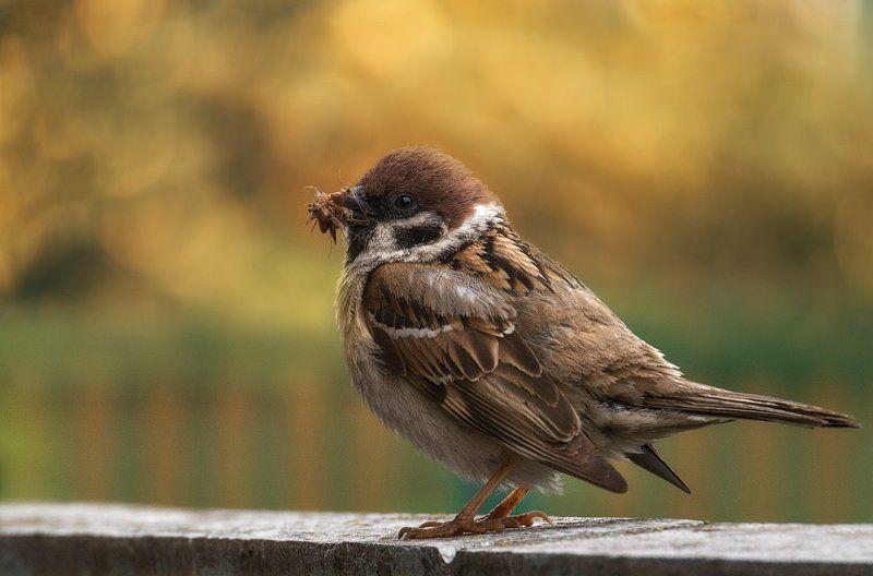 Немного о птичкахphoto preview