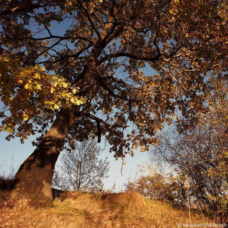 беларусь Дуб приглашает в осеньphoto preview