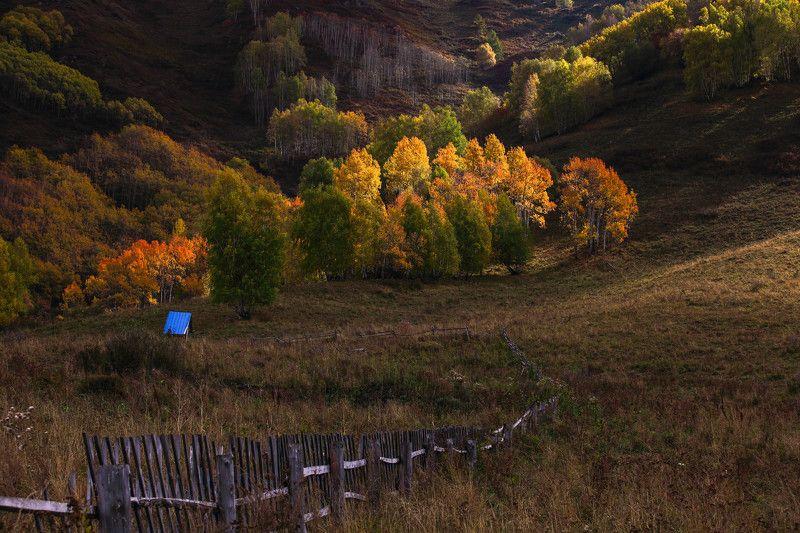 Алтайский photo preview