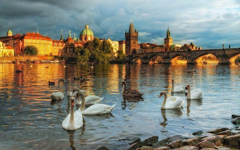 Прага, лебеди Прагаphoto preview