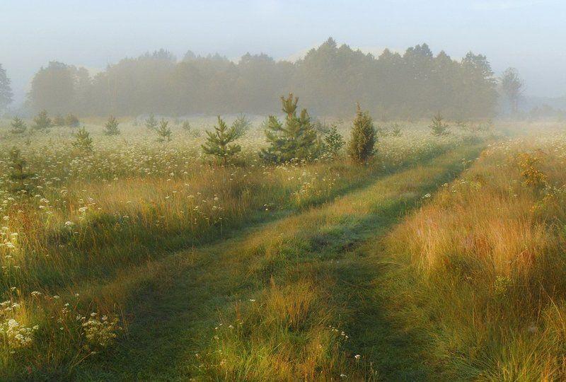 неман, луг, утро, солнце, туман На лугах Неманаphoto preview