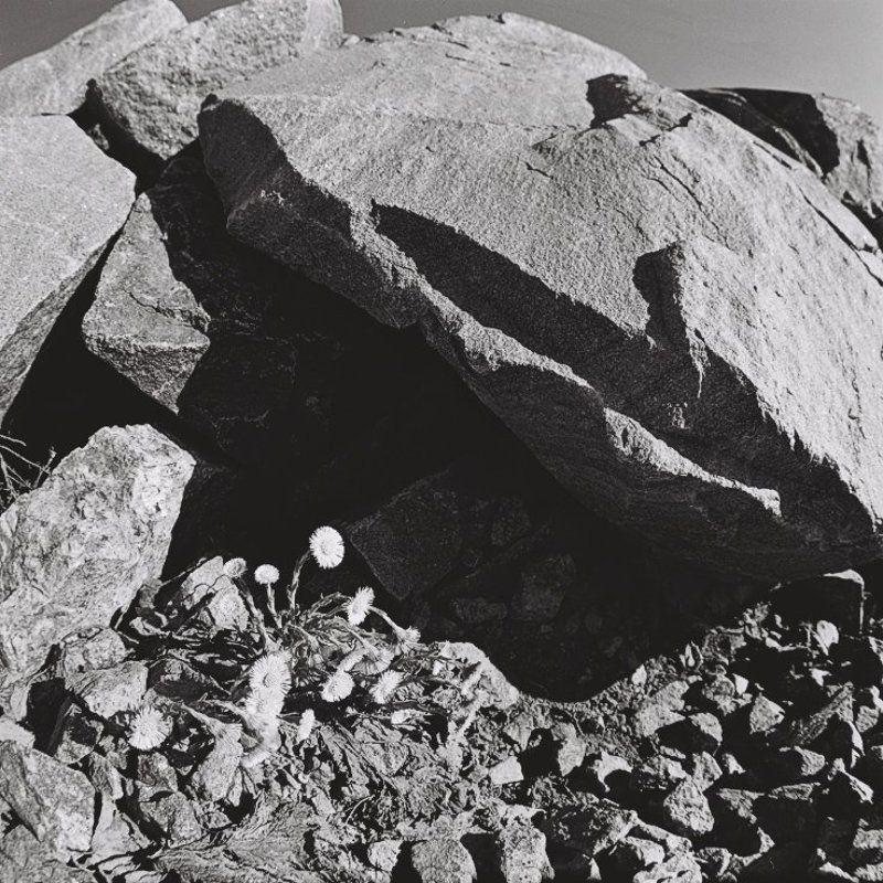 Живущие среди камней.photo preview
