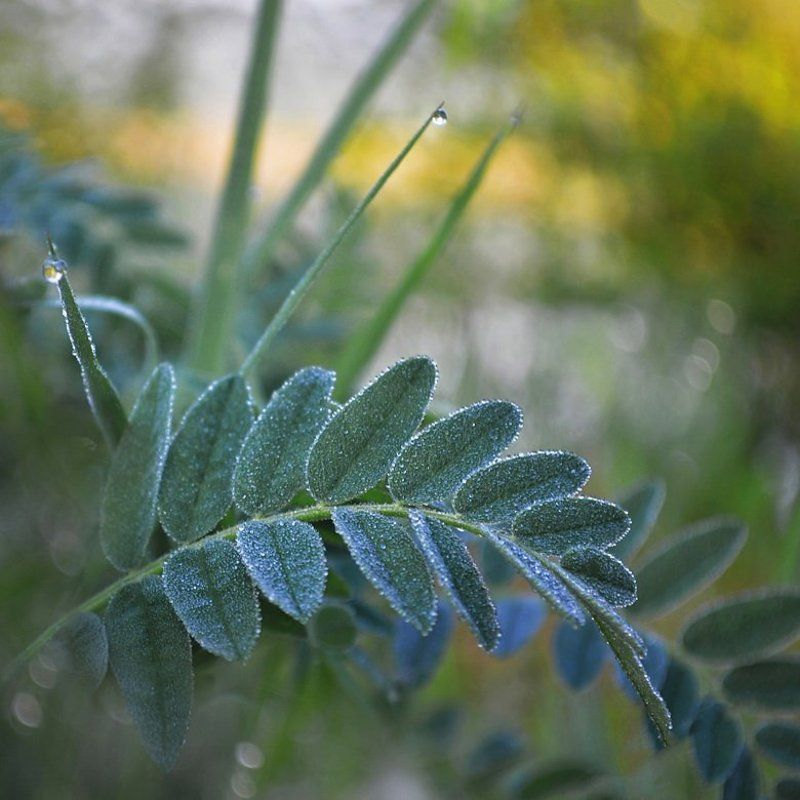 роса, капельки, листья, травы, утро В капельках росыphoto preview