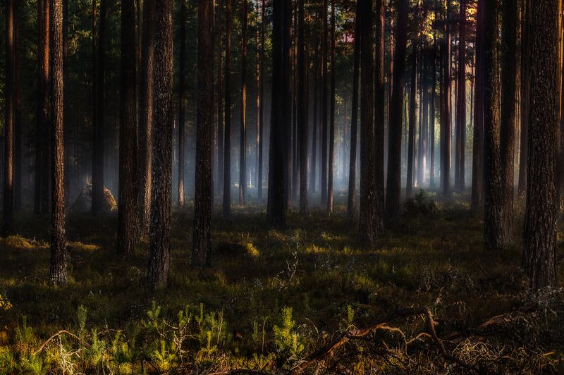 In the forest...photo preview