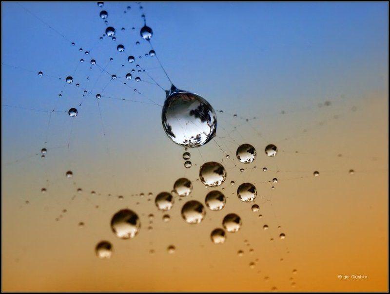 струны паутинка роса На струнах Вселеннойphoto preview