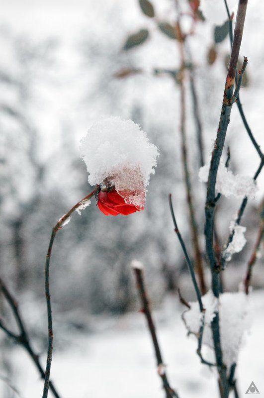 Зимняя шапкаphoto preview