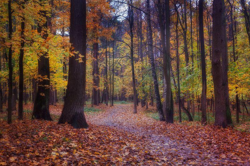 Осенняя симфонияphoto preview