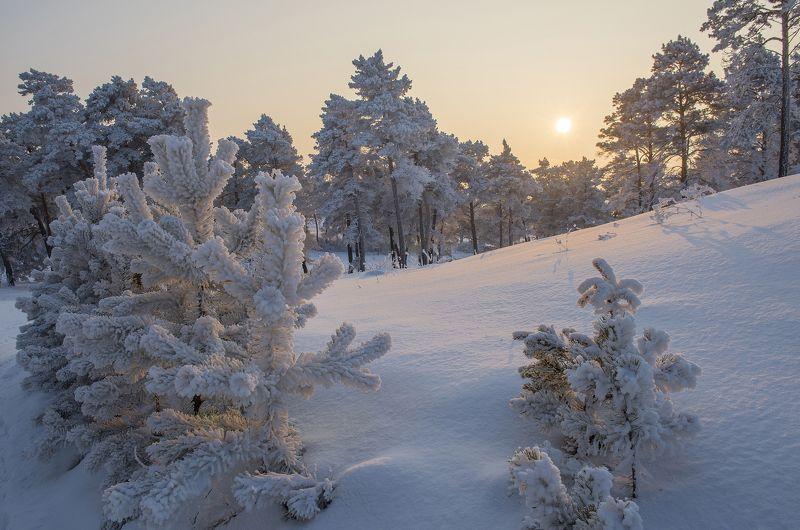 зима, снег, мороз, закат, деревья ***photo preview