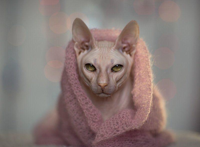 В розовомphoto preview
