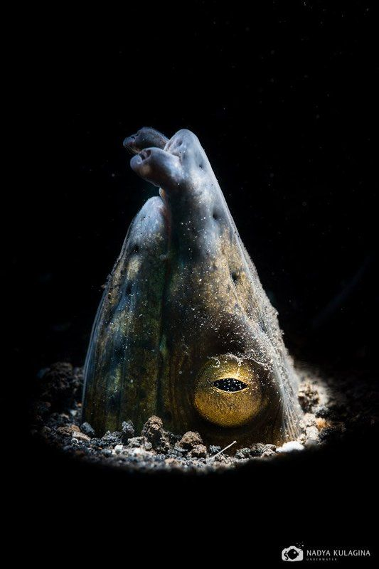 underwater, macro, shoot, swimming, diving, Всевидящийphoto preview