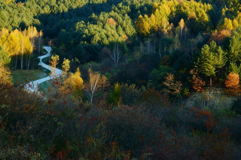 asia,korea,south korea,autumn,morning,light,mountain,birch,trees,rime,frosty,path, Morning light in the mountainphoto preview