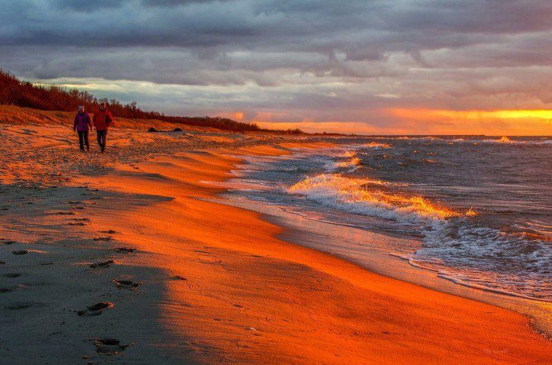 Балтийский берег, рыжая заряphoto preview