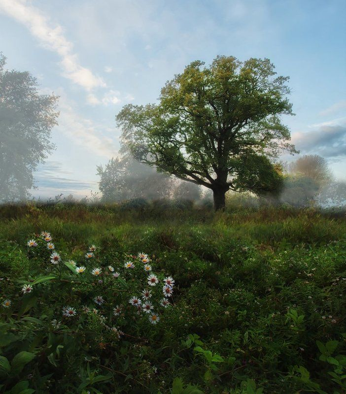 Дуб, Ключенков, Пейзаж Из жизни одного дереваphoto preview