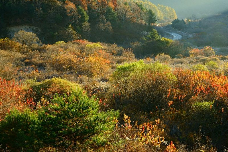 asia,korea,south korea,autumn,morning, frost, colorful,sunlight,mountain,valley,nature,road,forest Natural gardenphoto preview