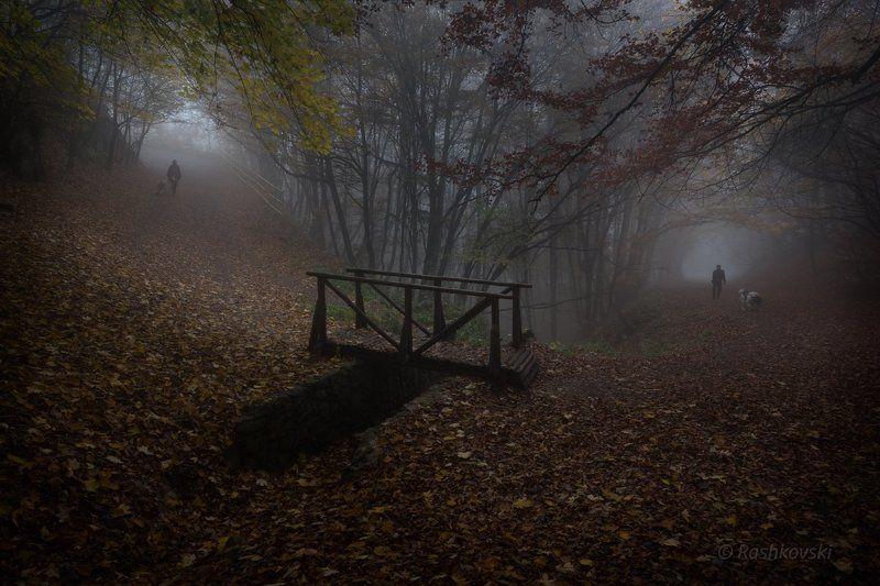 Autumn walksphoto preview