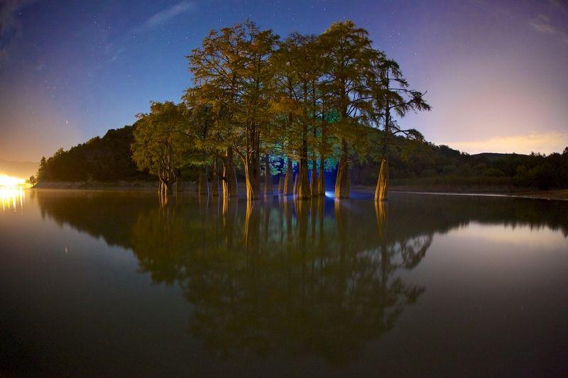 роща болотных кипарисов поселок сукко краснодарский край  Сон исполиновphoto preview