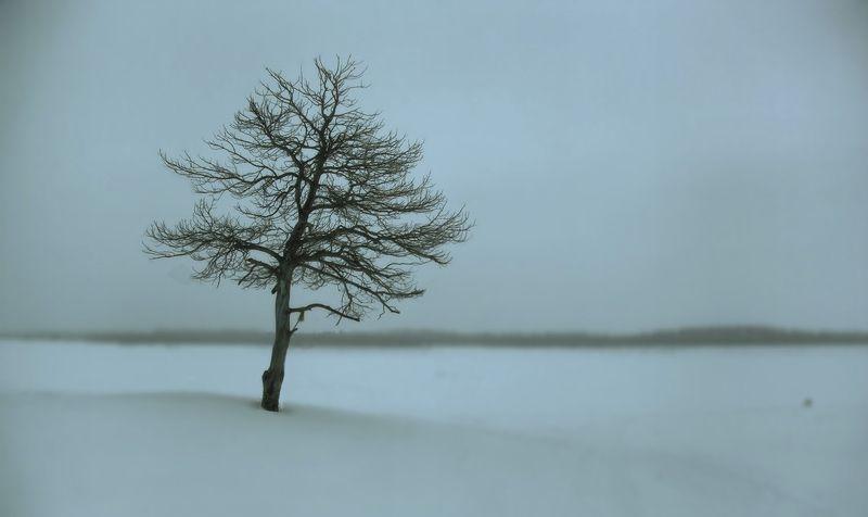 югра зимний минимализмphoto preview